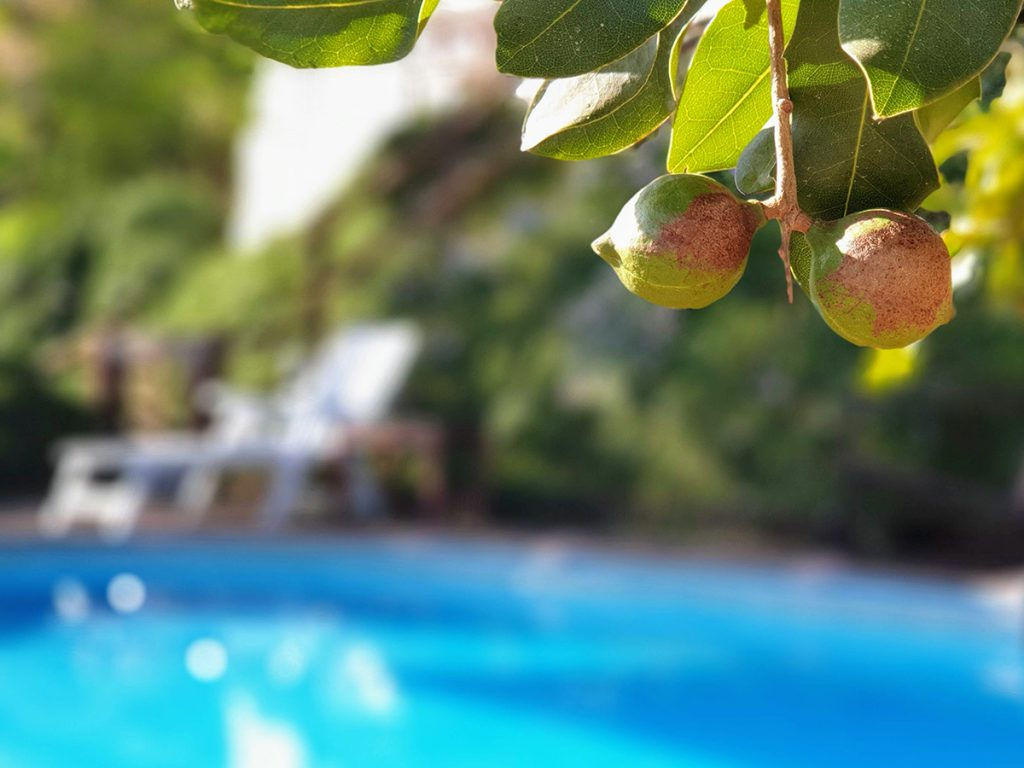Holiday Home Encantada swimming pool macadamia nuts