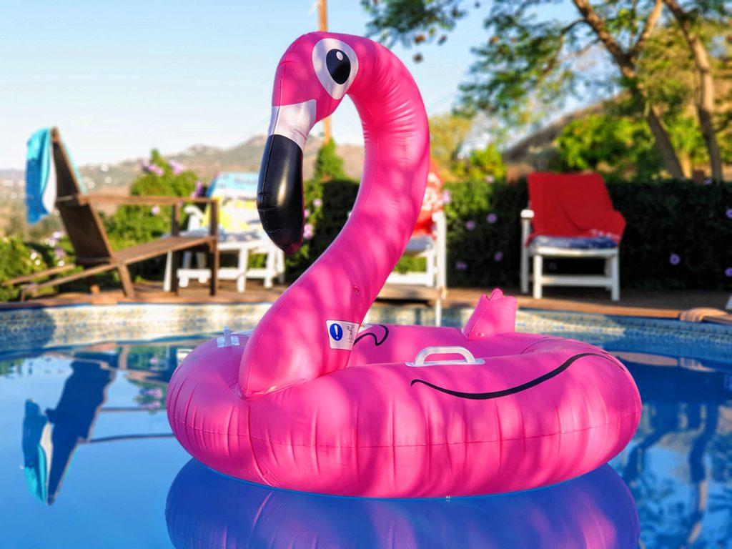 Encantada swan in pool