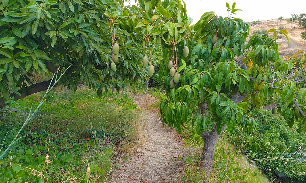 Encantada food forest