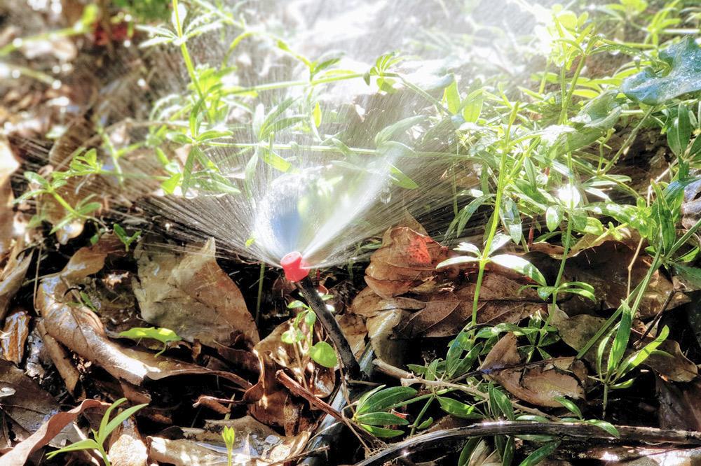 Food forest sprinkler